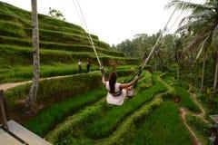 旅游摇摆在稻米 Tegallalang Gianyar摄政 巴厘岛 印度尼西亚 免版税库存图片