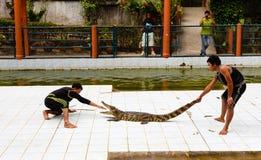 旅游游览,大象展示,向苏梅岛 图库摄影