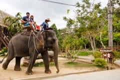 旅游游览,大象展示,向苏梅岛 库存图片