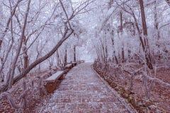 旅游足迹在黄山国家公园 图库摄影