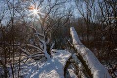 旅游道路在有太阳和透镜的多雪的森林飘动 免版税库存图片