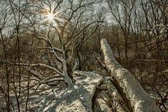 旅游道路在有太阳和透镜的多雪的森林飘动HDR 免版税库存照片