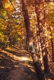 旅游道路在森林里 图库摄影