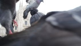 旅行、假日和寒假概念-与滑稽的鸽子的愉快的年轻人作为selfie照片在中央寺院前面 影视素材