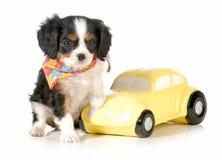旅行与小狗 免版税库存图片