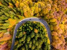 旅行低谷森林秋天中 免版税图库摄影