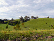 旅行向澳大利亚。领域,平原,小山 库存图片