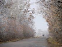 旅行在一个不同的方向的路的两辆汽车。在路附近的树。 库存图片