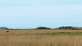 旅行在徒步旅行队在南非 影视素材
