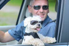 旅行在汽车的狗和他的所有者 免版税库存图片