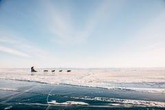 旅行多壳的拉雪橇狗 免版税库存图片