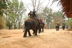 旅行家乘驾大象 库存图片
