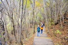 旅行家在秋天森林里 免版税库存图片
