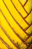 旅行家的棕榈的叶柄样式 库存图片