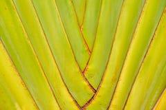 旅行家的棕榈的树干 图库摄影