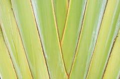 旅行家的棕榈 库存照片