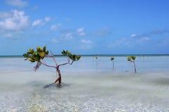 旅行的加勒比海湾天堂 库存照片