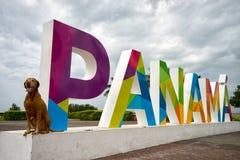 旅行的狗在巴拿马 库存图片