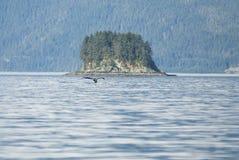 旅行目的地-鲸鱼观看的冒险 免版税库存图片