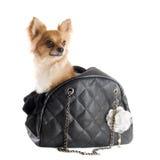 旅行袋子和奇瓦瓦狗 库存图片