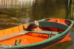 旅行鸭子 图库摄影