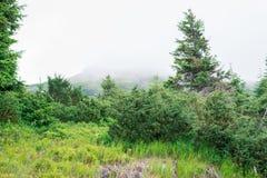 旅行,迁徙 绿色灌木和树在前景和一座山在雾 水平的框架 库存照片