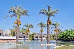 旅馆的风景设计 库存照片