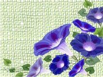 旋花植物balkony栅格 免版税库存照片
