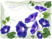 旋花植物balkony框架 免版税库存图片