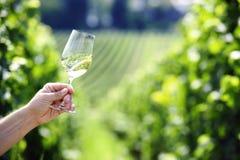 旋转一杯白葡萄酒 库存图片