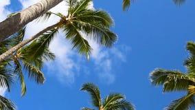 旋转的棕榈树在反对清楚的天空的一个热带森林里 股票视频