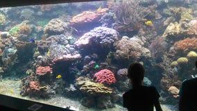 水族馆哈根贝克 免版税库存图片