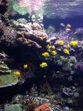 水族馆在巴伦西亚 免版税库存图片