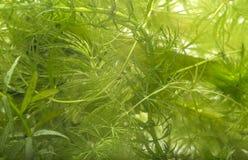 水族馆植物 库存图片