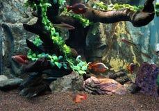 水族馆生活外部视域 免版税库存照片