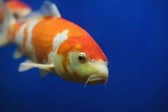 水族馆的异乎寻常的热带珊瑚鱼环境 免版税库存图片