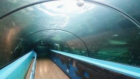 水族馆走廊@海洋生活悉尼水族馆 免版税图库摄影