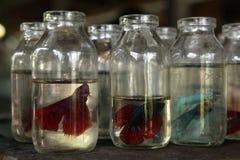 水族馆鱼市在日惹,中爪哇省,印度尼西亚 库存图片