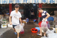 水族馆鱼消毒作用 免版税库存图片