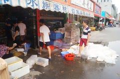 水族馆鱼消毒作用 图库摄影