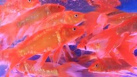 水族馆鱼缸 影视素材