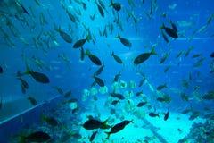 水族馆,新加坡 免版税库存照片