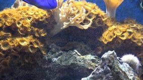 水族馆,鱼缸,海生动物 股票录像