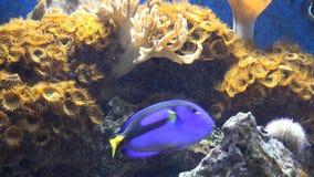 水族馆,鱼缸,海生动物 股票视频