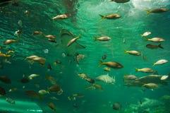 水族馆黑色图画鱼线路白色 免版税库存照片