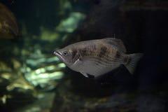 水族馆黑色图画鱼线路白色 图库摄影