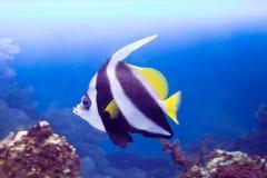 水族馆黑色图画鱼线路白色 库存照片