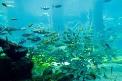 水族馆Altlantis巴哈马 库存图片