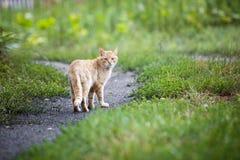 无业游民的猫 免版税库存照片