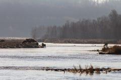 无冰的河早晨 库存图片